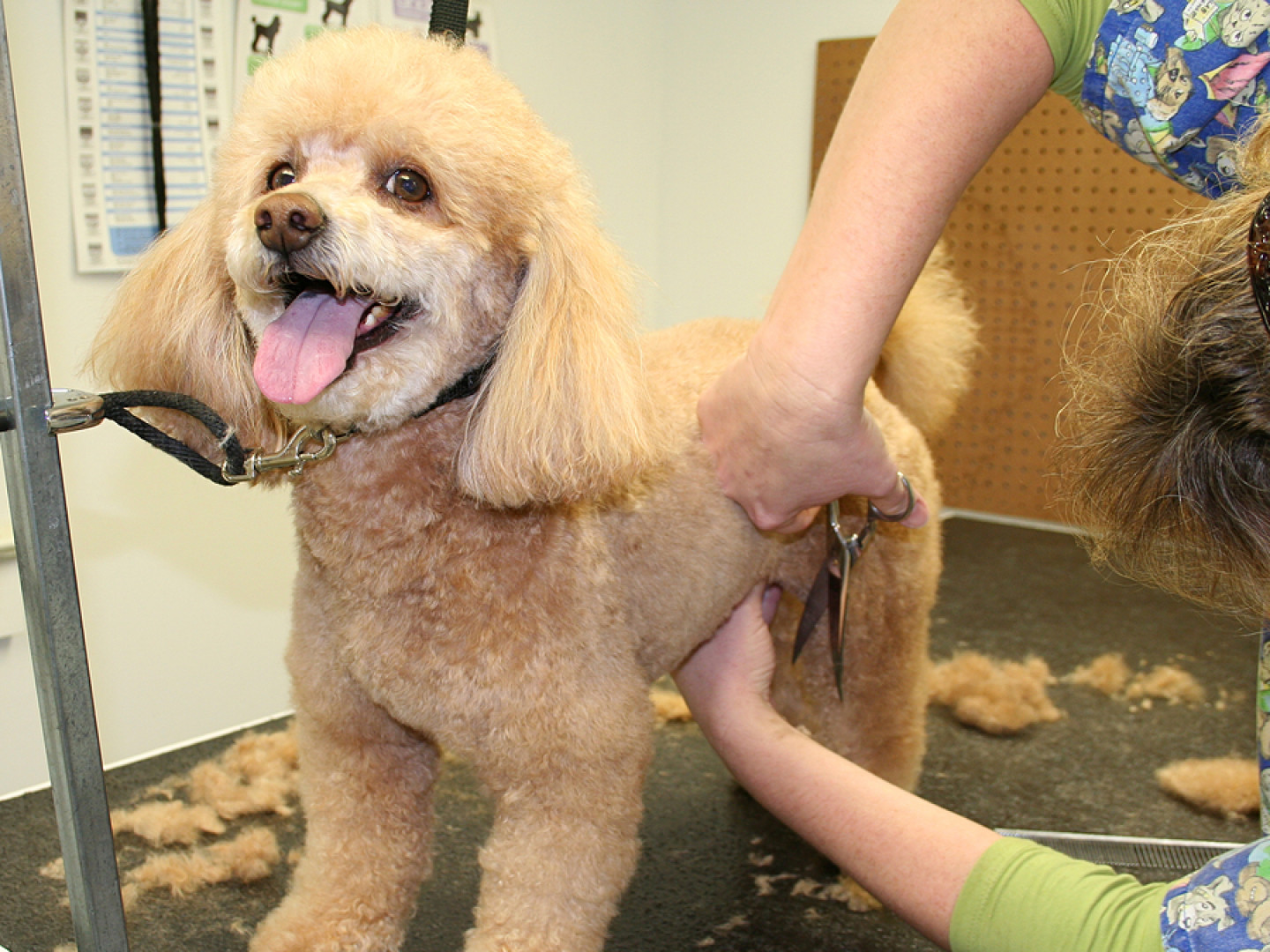 Pet Grooming in South Dartmouth, MA