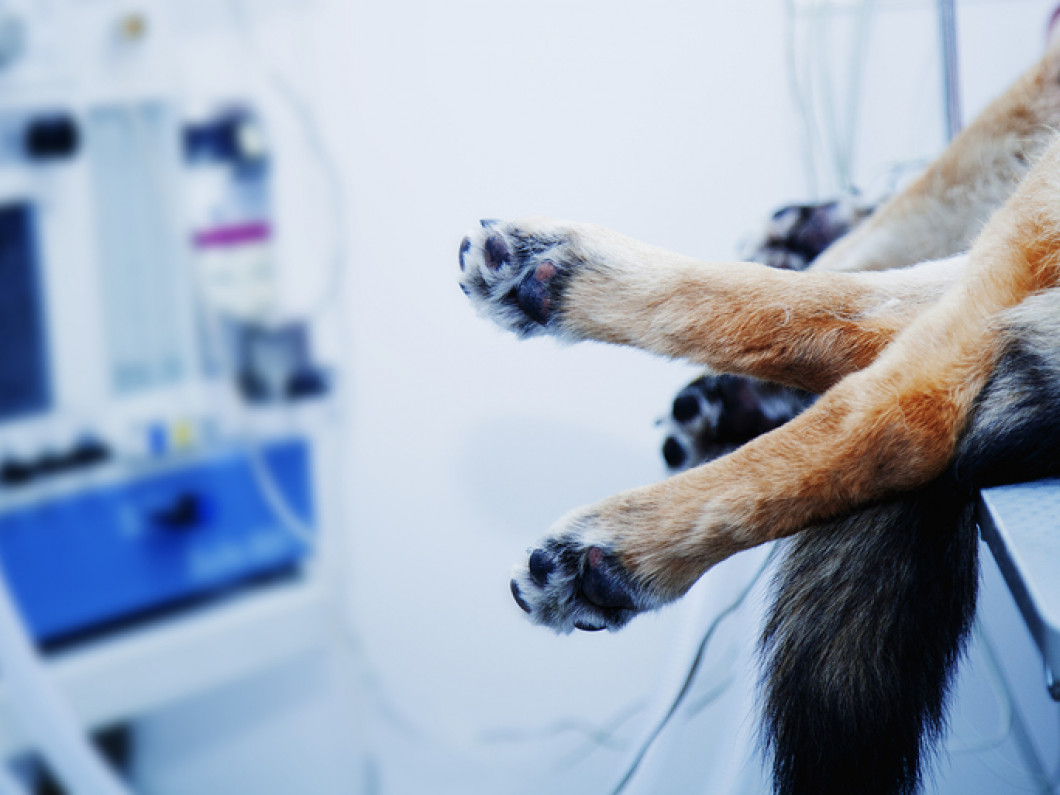 Pet Anesthesia in South Dartmouth, MA