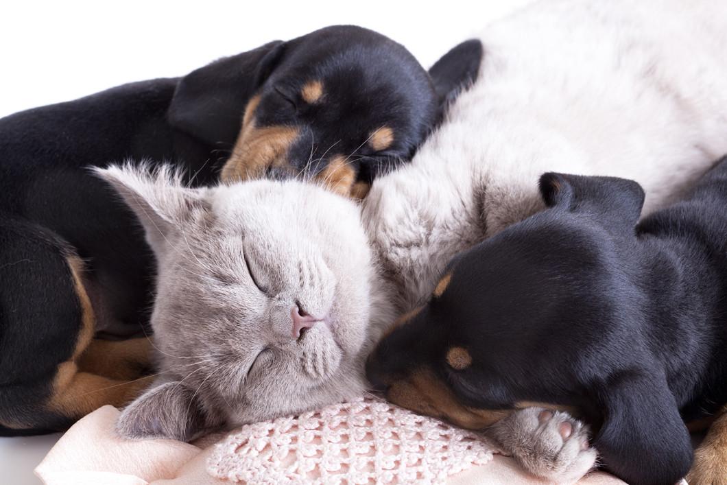 Puppy And Kitten Care South Dartmouth Ma Hidden Brook